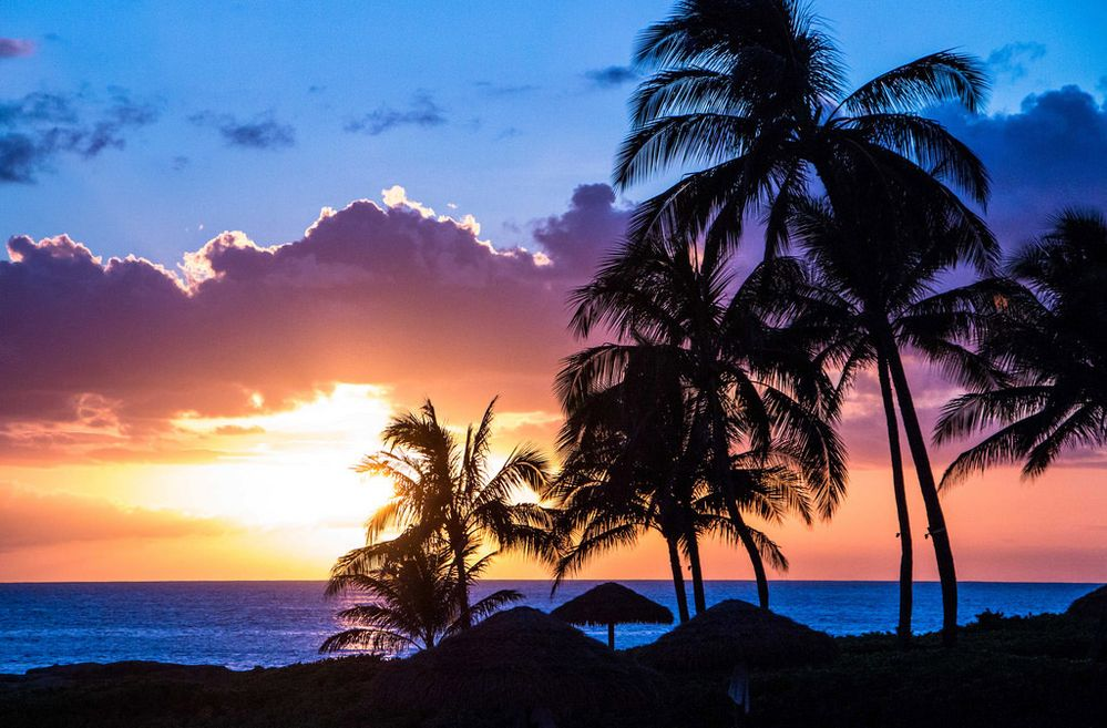 Palm-trees-sunset-3.jpg