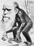 DARWIN Ape 2.jpg