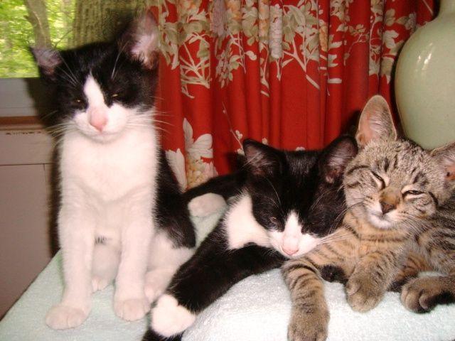 3 new kittens July 2013 5.JPG
