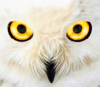 OwlFace(Small).png