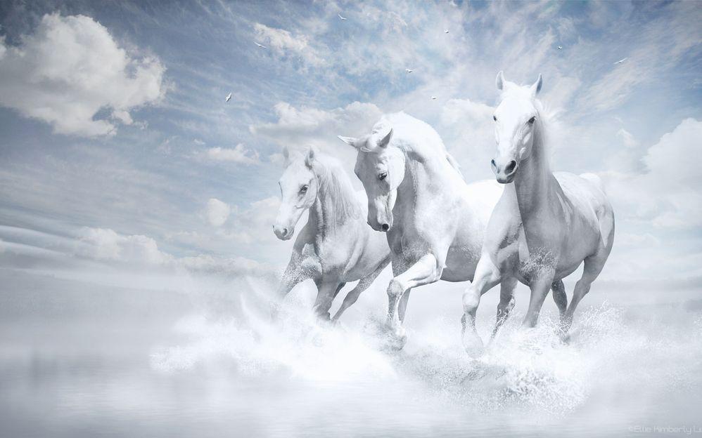 Animals___Horses_White_horses_by nikolaj075526_18.jpg