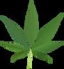 Cannabis_leaf_2.svg.png